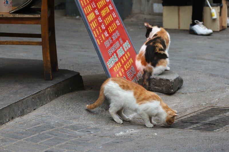 Кошки, улица Ляншидянь, Пекин