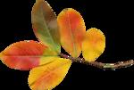 Carena_Autumn Crunch_7.png