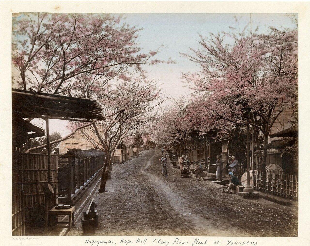 Иокогама, Цветение вишни на улицах города