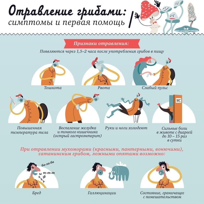 Что делать с кошкой при отравлении признаки