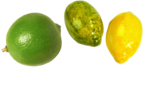 цитрусы (64).png