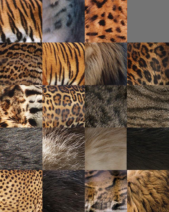 Текстуры меха животных семейства кошачьих