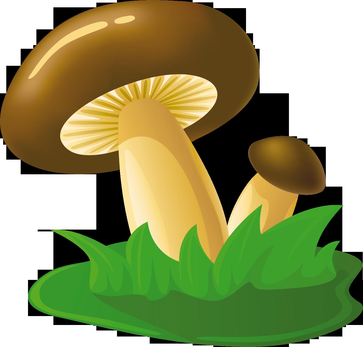 нарисованные картинки грибов лисичек