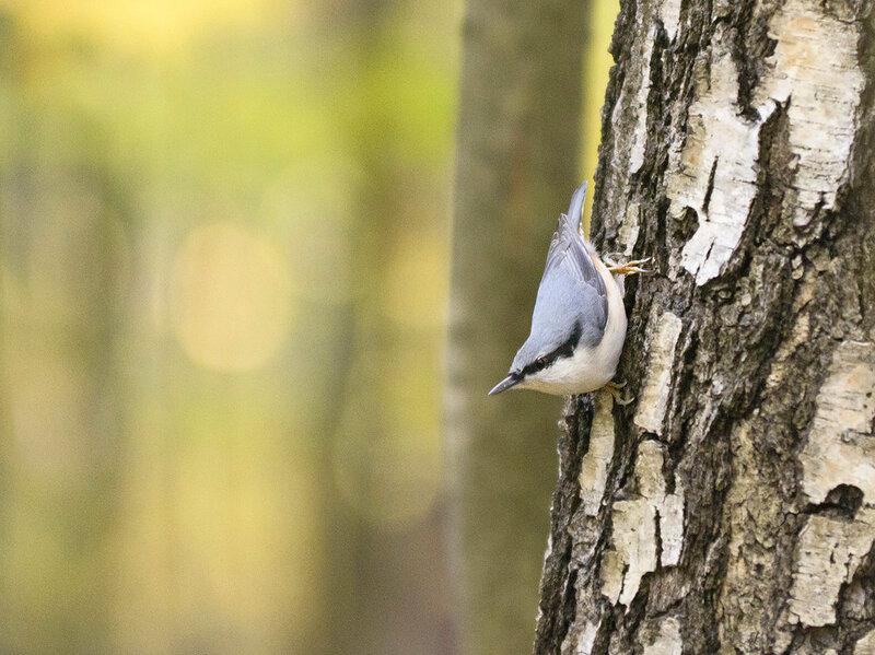 Птицы в Тимирязевском парке