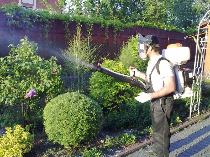 садовые вредители насекомые