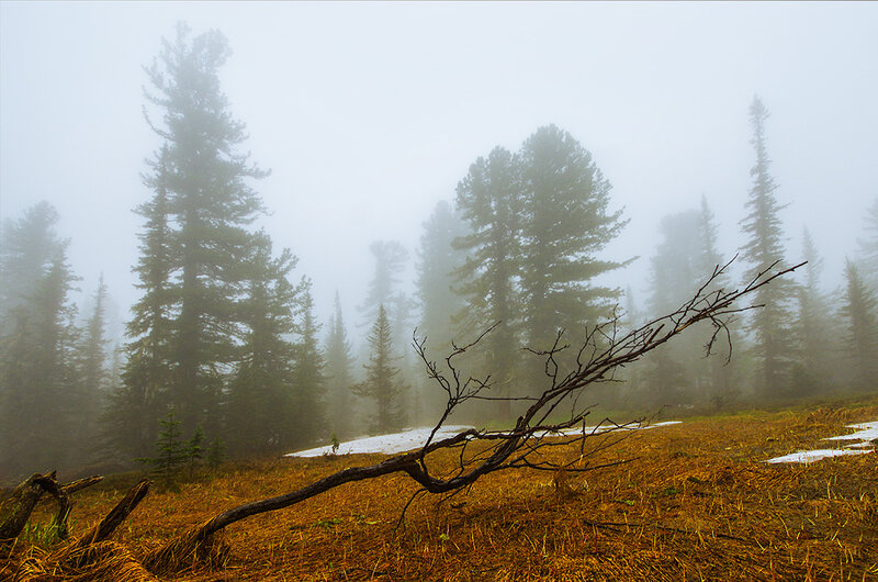 Засохшее дерево
