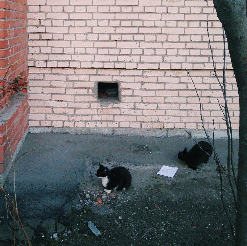 Коты Приоморского района. Петербург.жж.рф