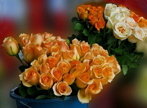 Наш мир - аллея роз