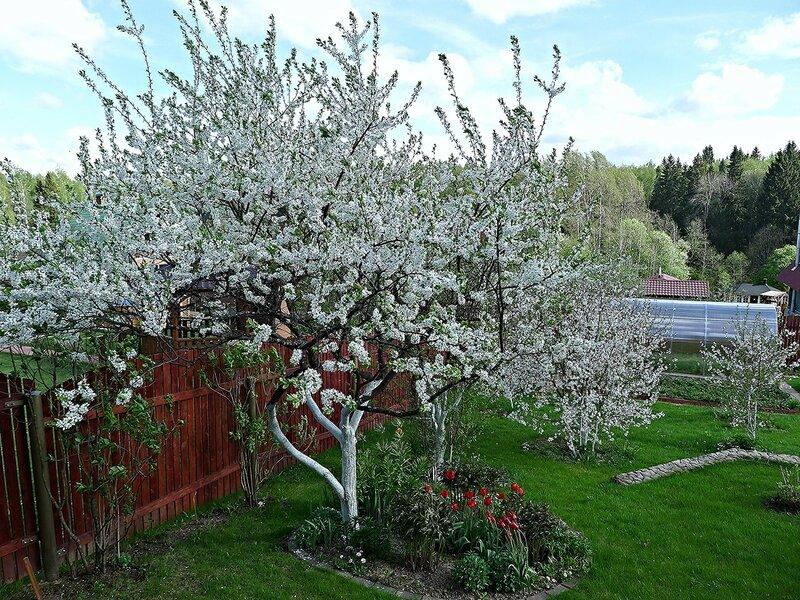 Весна - ожидание...