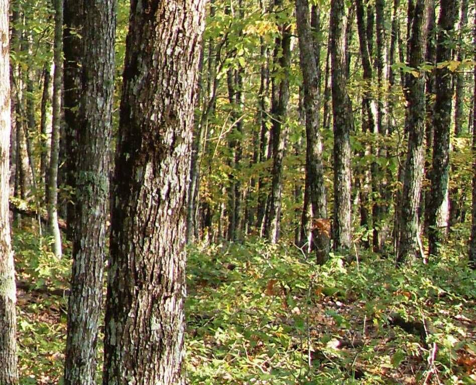 12 октября 2008, под Горячим Ключом, в лесу (186).JPG