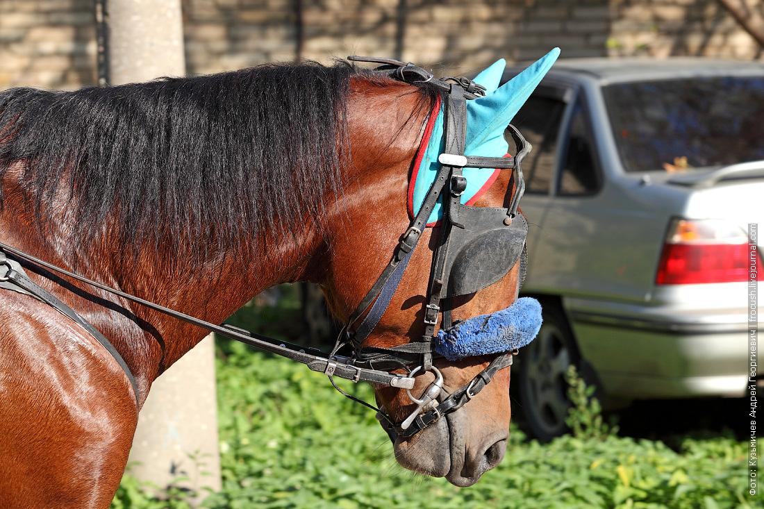 ипподром бега лошади