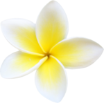 ldw_UnderPalmTree_flower-yellow1.png