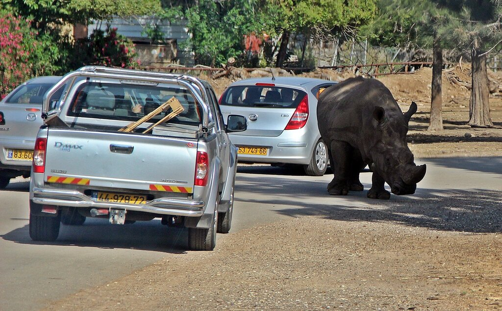 Носороги на дороге