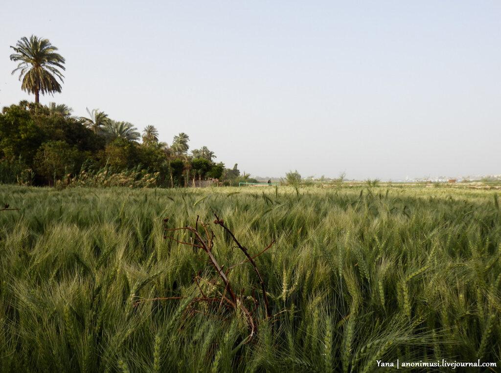 Побережье реки Нил. Лкусор. Египет.