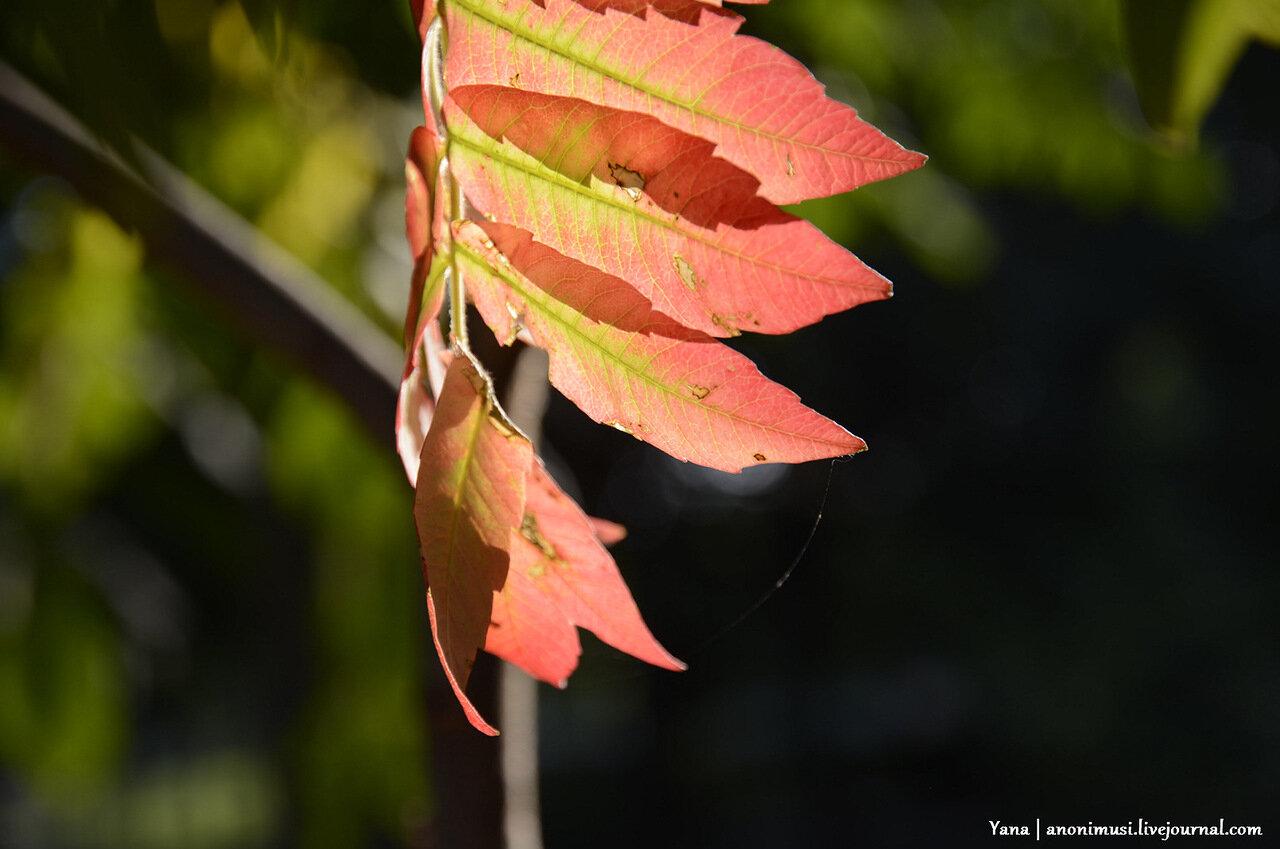 Осень в Гомеле