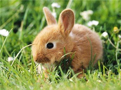 ветеринарные мероприятия кроликов