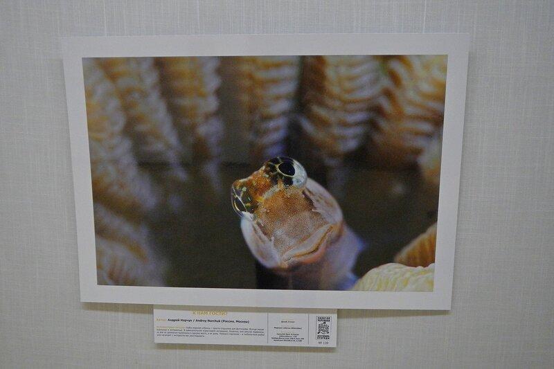 К нам гости? Андрей Нарчук. Рыба морская собачка. На фестивале дикой природы Золотая Черепаха