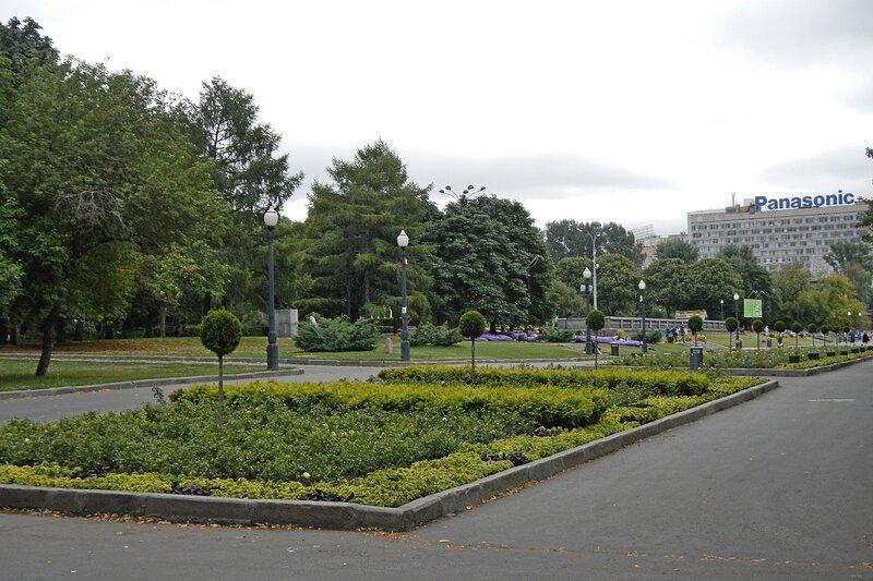 Аллея с подстриженными шарами деревьями в парке им. Горького