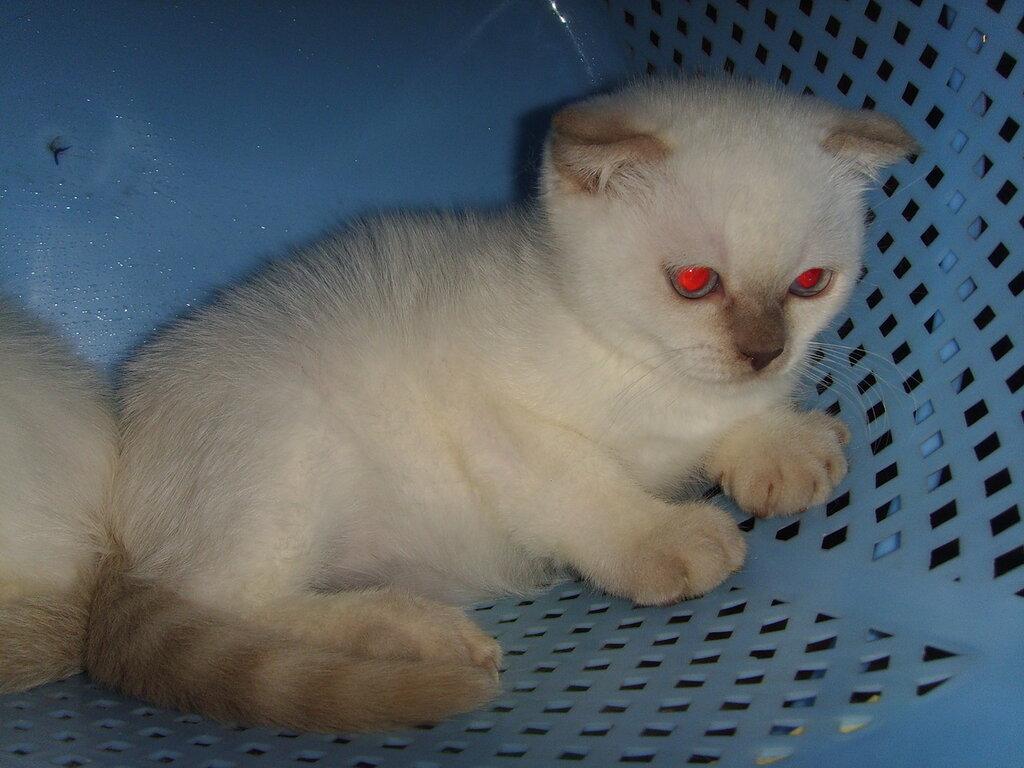 Фото жалостливых котят однорядные