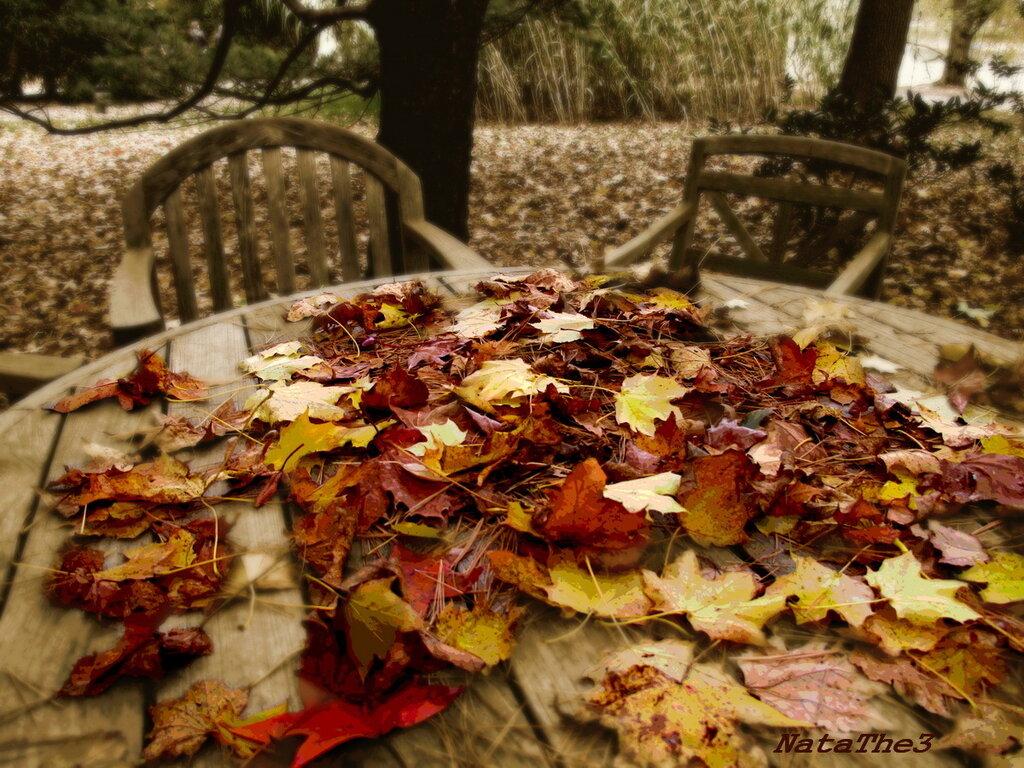 Осень на моем столе