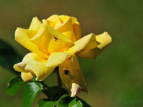 Flowers of the Nikitsky Botanical Gardens