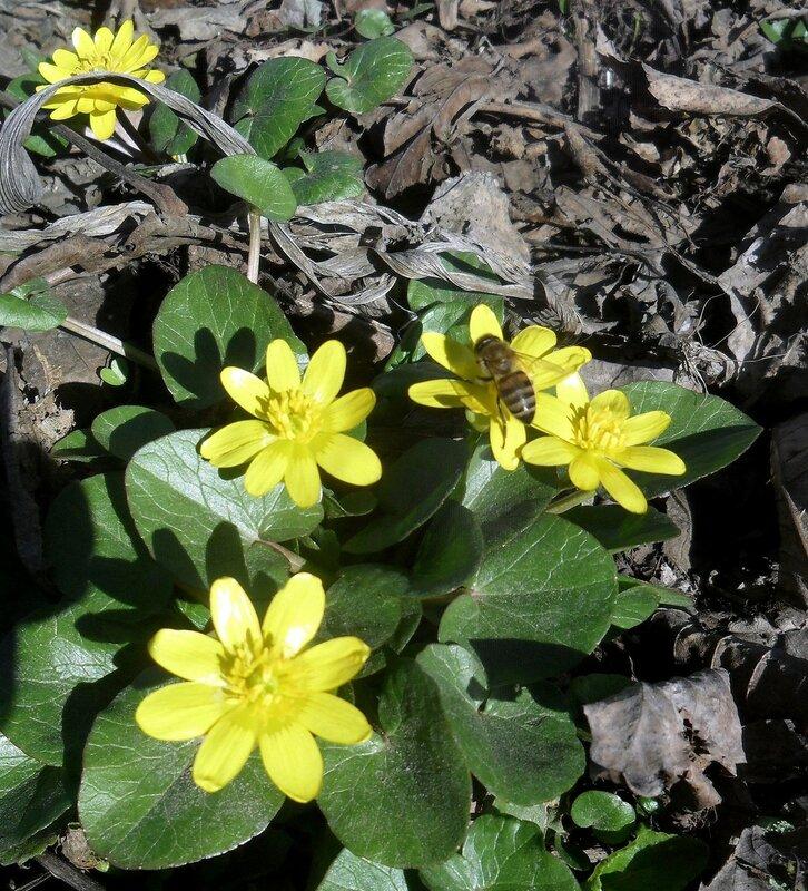 В мире растительном, на исходе февраля ... 03 SAM_5701.JPG
