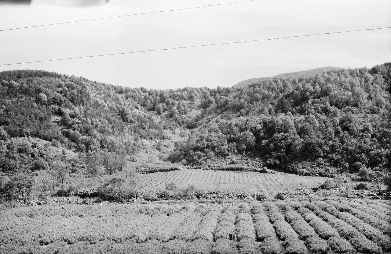 Холмск. Ягодники сельхозстанции