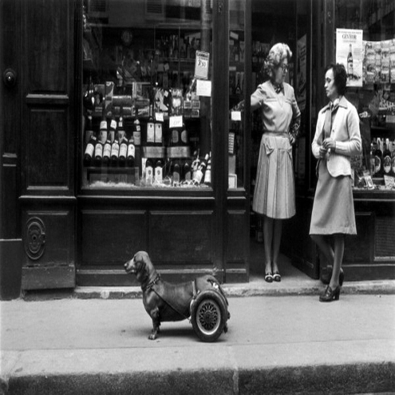 1977. Собака на колесах