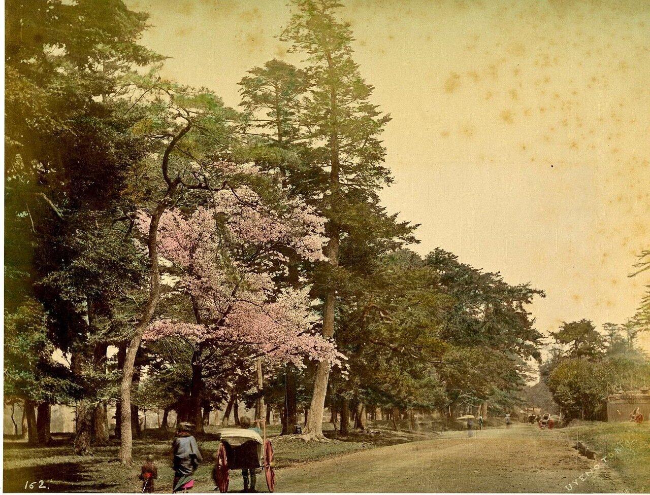 Токио. Парк Уэно