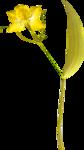 Lemony-freshness_elmt (67).png