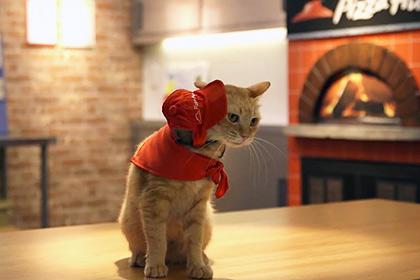 Японская пиццерия для обслуживания гостей «наняла» котов