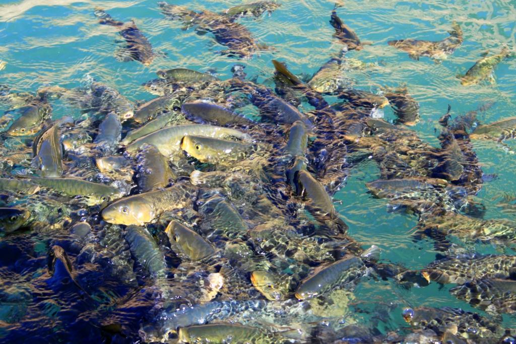 Озеро с рыбами в Урфе