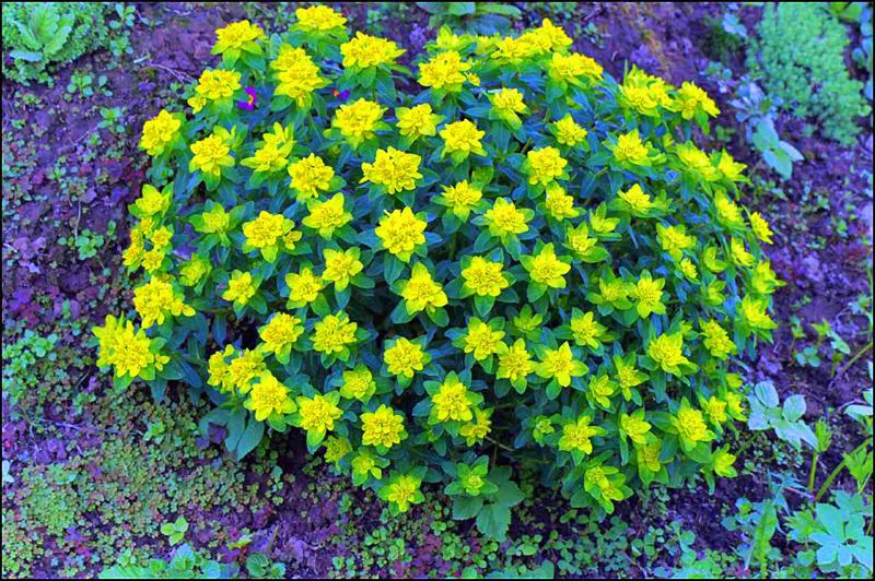 Какие многолетние цветы сажают в сентябре
