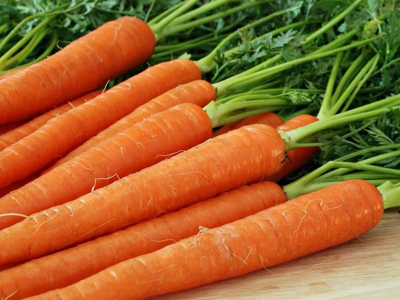 описание сортов моркови