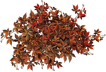Mysterious Forest_Element_Scrap and Tubes (27).png