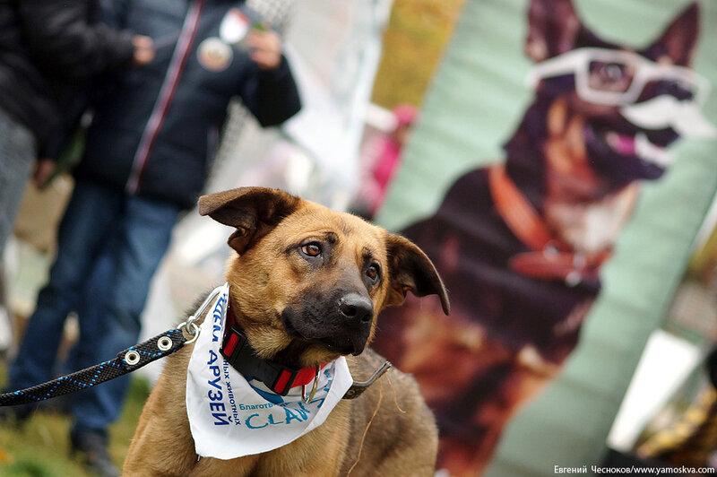 Осень. Фестивальный парк. Собаки. 04.10.14.06..jpg