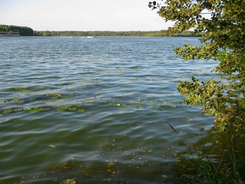 Кувшинки, Пяловское водохранилище