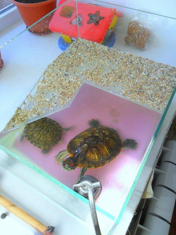 Черепашки, аквариум, октябрь, 2014 год