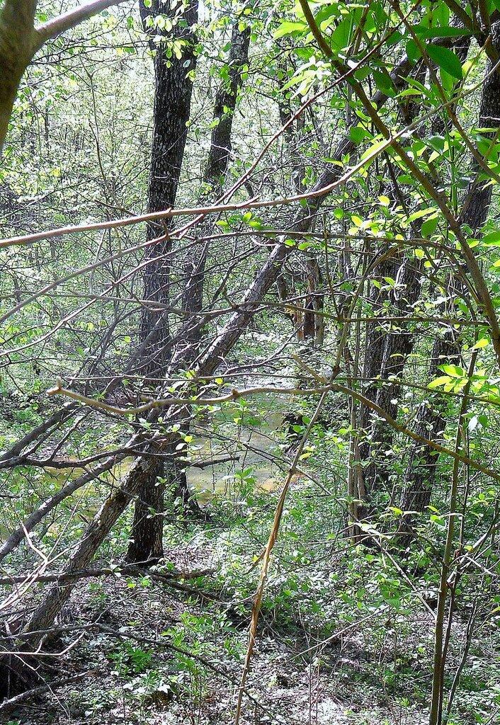 У реки, ветвей переплетение ... SAM_7695.JPG