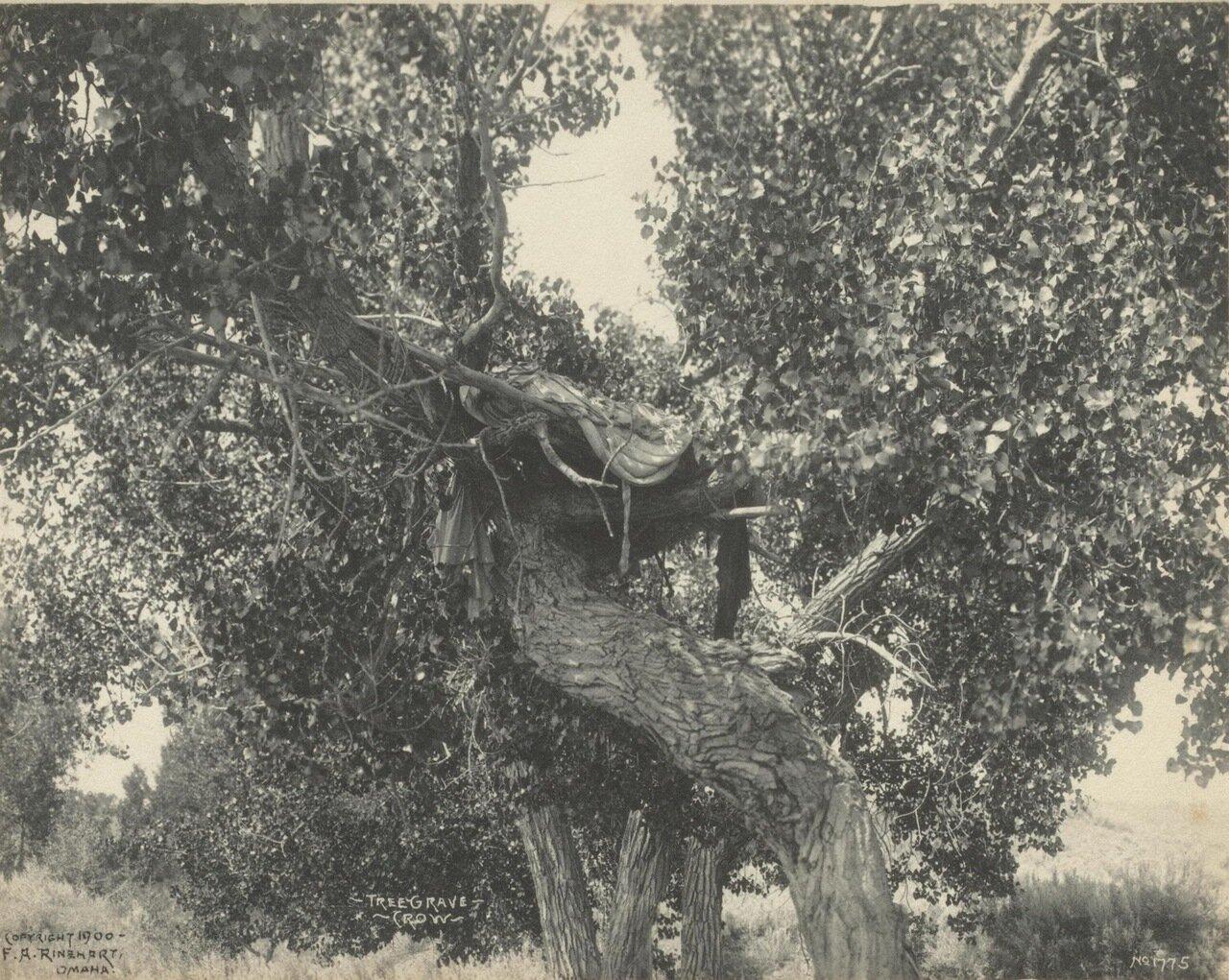 Погребальное дерево племени кри