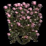 цветы (95).png