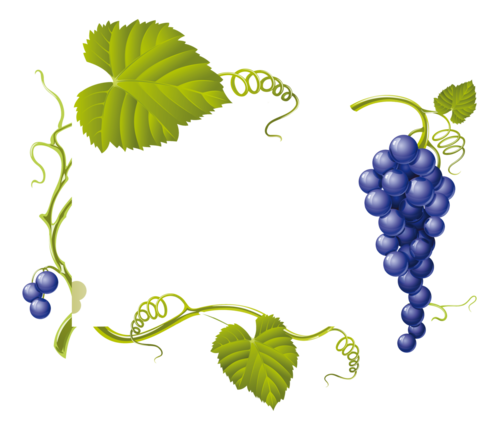 виноград (33).png
