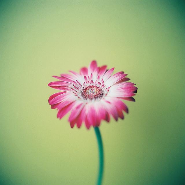 Send no flowers, Kumiko Sekiguchi1280.jpg