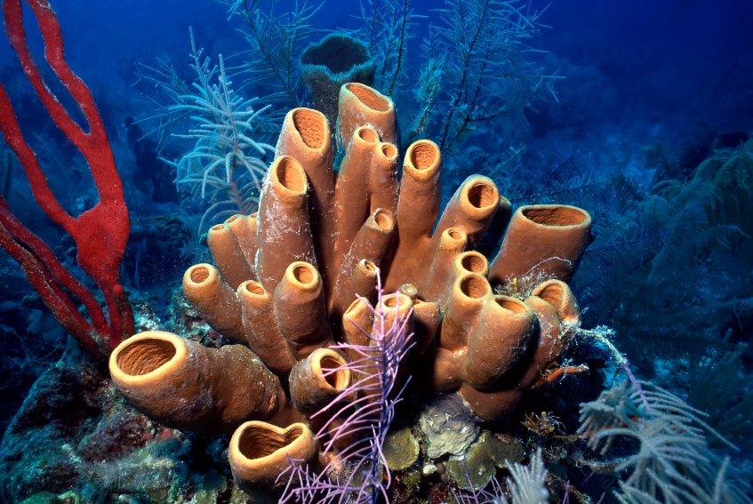 Кораллы, губки, тропически моря. Подводные съемки