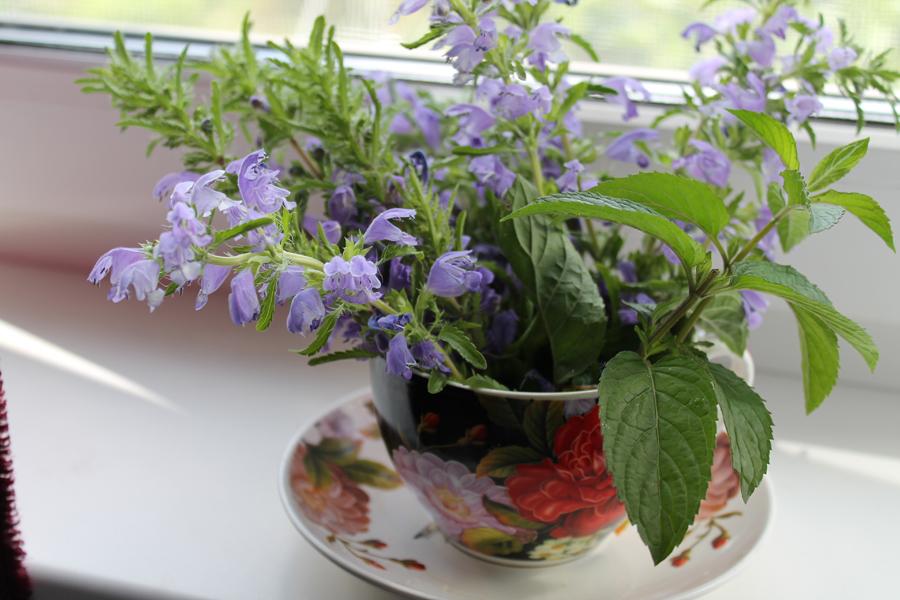 Фотоальбом «Лучшее из сада»-сбор чайных трав