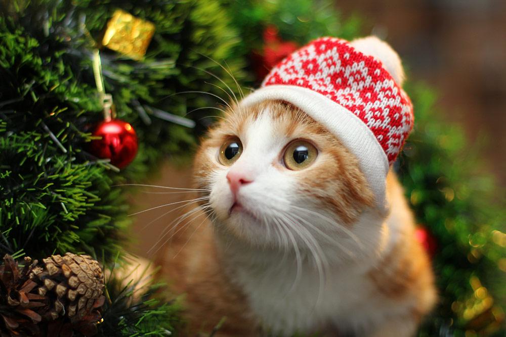 С наступающим новым годом кот