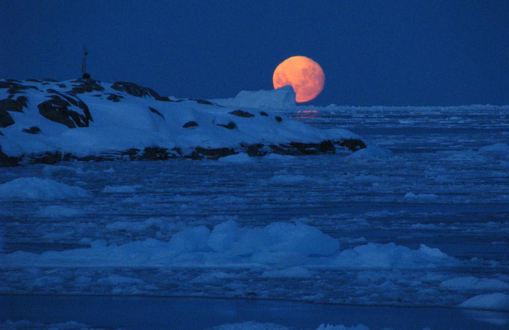 19. Стройными рядами ходят пингвины Адели на мысе Денисон, залив Содружества, Восточная Антарктида.