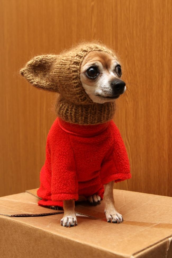 Погода такая дурацкая! Наденешь шапку— как дура вшапке, ненаденешь— как дура без шапки. Начинаю