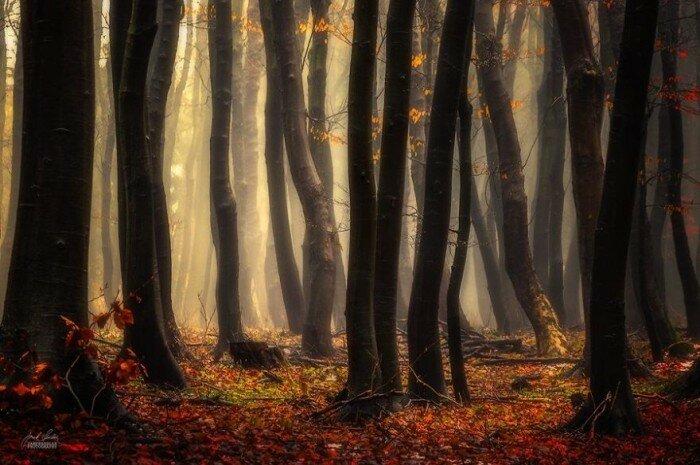 Осенний лес изнутри