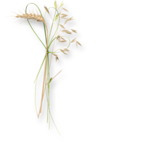 meadowbut_cluster6 (5).png